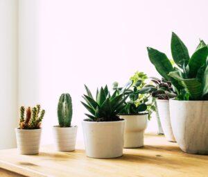 3 tips voor het verzorgen van kamerplanten!